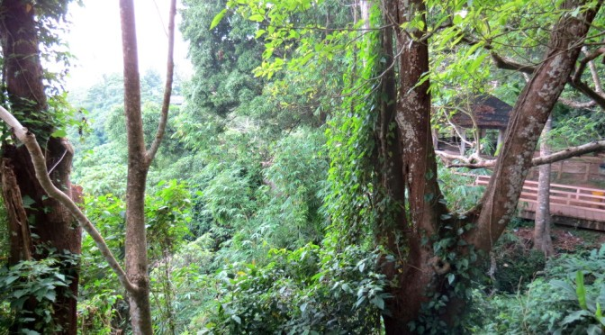 What it feels like to try Zip Lining in Tagaytay, Philippines