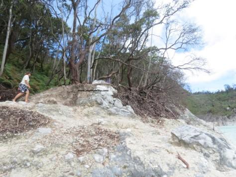 Kawah Putih forest area